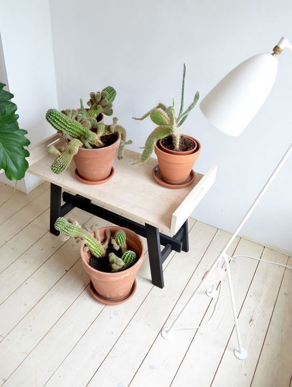 Original Ideas For Decorating Interiors With Cactus 3