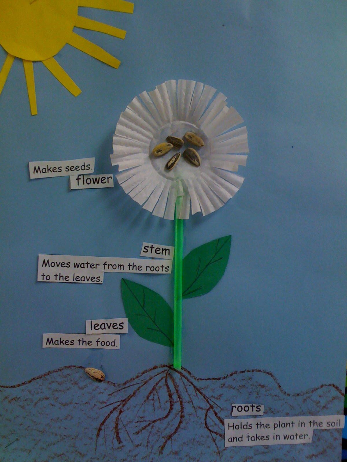 Crayon Bits - a first grade blog: 3D Flower Diagrams