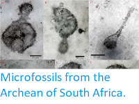 http://sciencythoughts.blogspot.com/2019/07/microfossils-from-archean-of-south.html