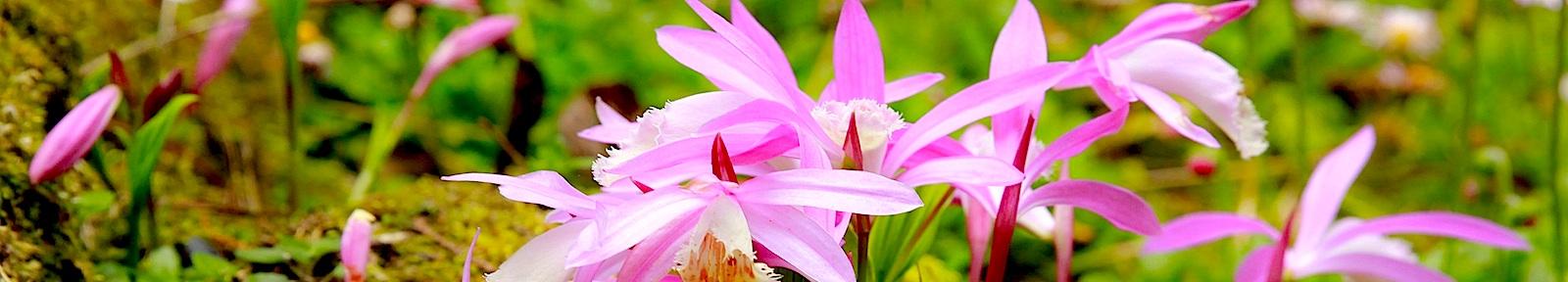 Божий мир цветов Пути Иакова