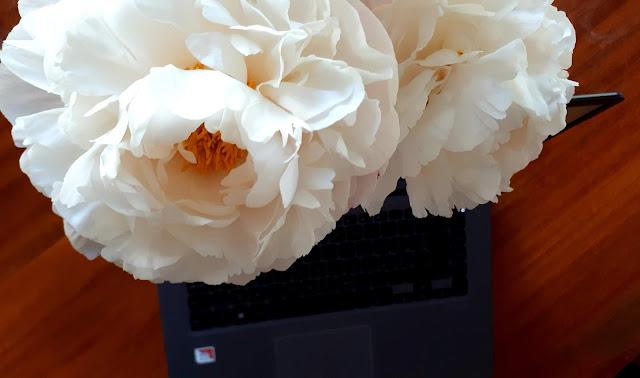 töihin paluu koronan keskellä, töihin kotiäitivuosien jälkeen, uusi työ, pioni, pioni kukkii