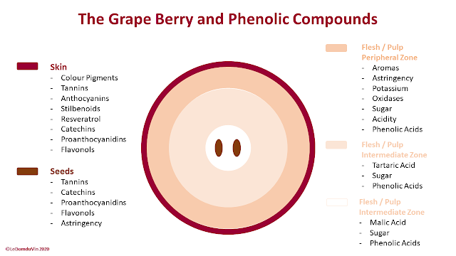 The Grape Berry and Phenolic Compounds by ©LeDomduVin 2020