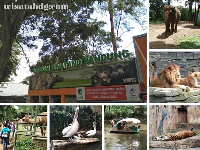 Kebun Binatang Bandung, Tempat Rekreasi dan Edukasi Liburan Keluarga