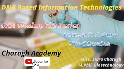 DNA Cloning - The Basics - Colony Hybridization Lecture 7