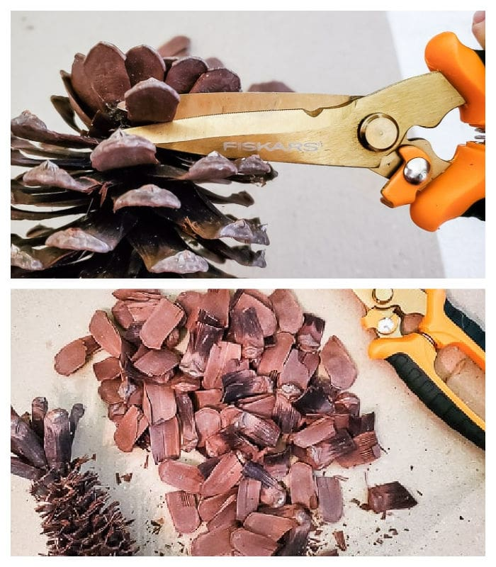 cut scales from pinecones
