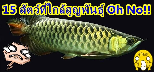 สัตว์ใกล้สูญพันธุ์, ปลามังกร, ปลาอะโรวาน่า, ปลาพิรารูคู