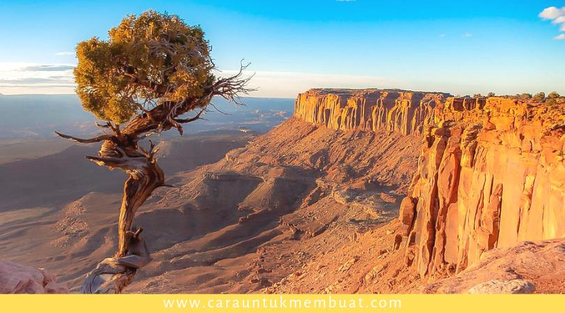 Juniper Tree on Canyonlands 15