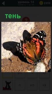Бабочка около стены, от которой падает тень на землю, ярко освещенная солнечными лучами