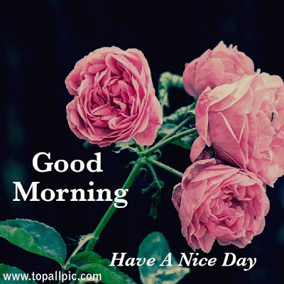 wishes good morning images hd