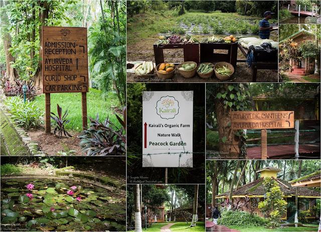 Kairali-the healing village