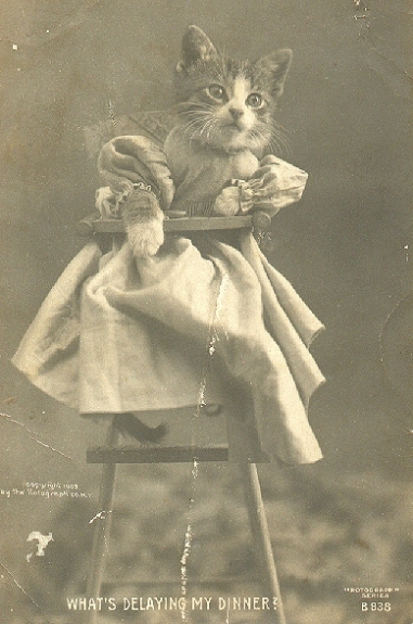 Funny Animal Photographs Of The Early 20th Century