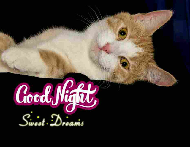 Sweet Dreams Good Night Images, Photos, Greetings and HD Pictures