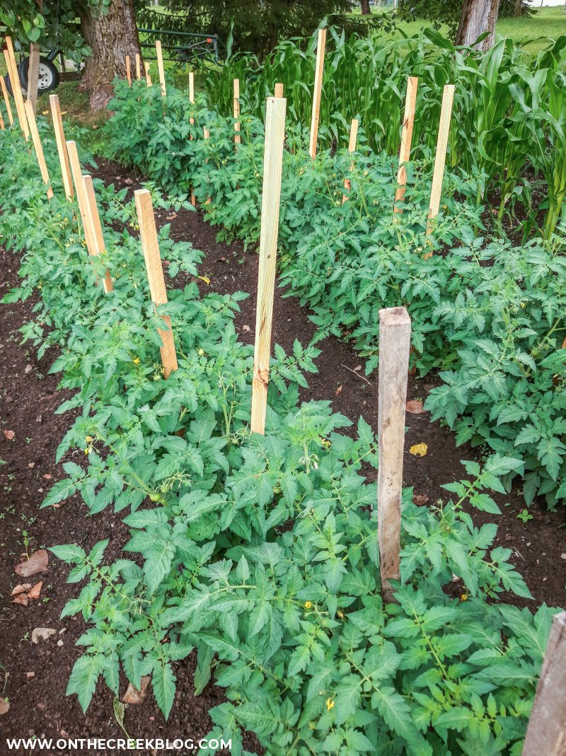 using stakes to support tomato plants | On The Creek Blog // www.onthecreekblog.com