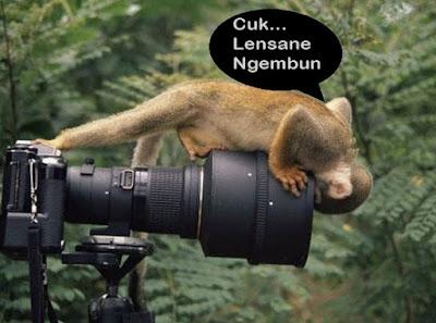 foto lucu hewan dan kamera