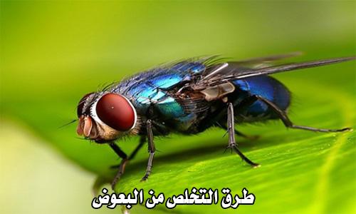 طرق التخلص من البعوض