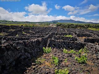 PORTUGAL / Biscoitos, Ilha Terceira, Açores, Portugal
