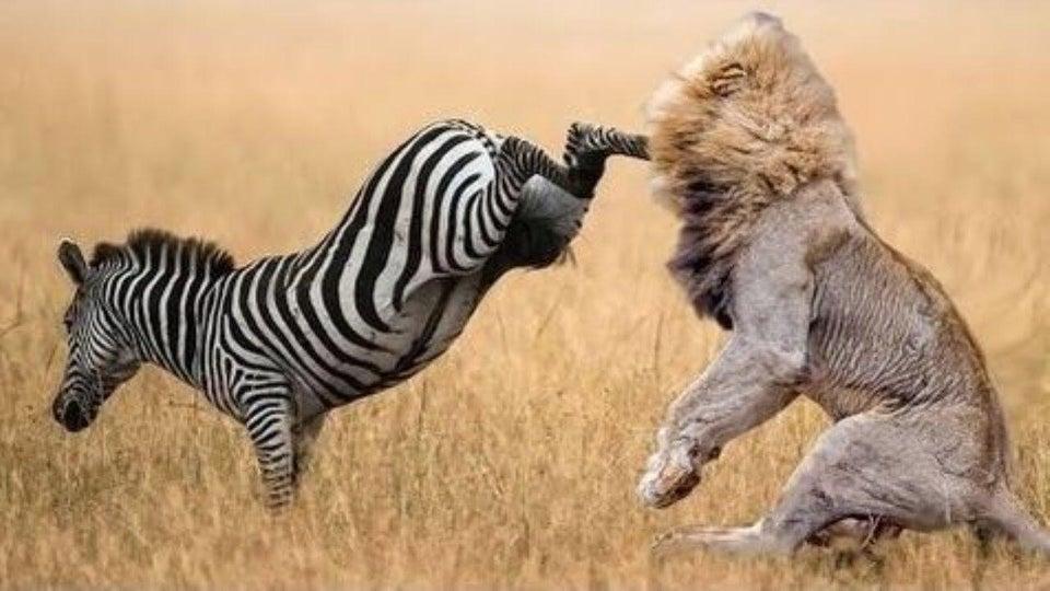 اضحك مع الحيوانات