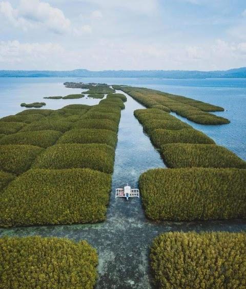 Take a tour at the Mangrove Plantation in Batasan Island in Bohol
