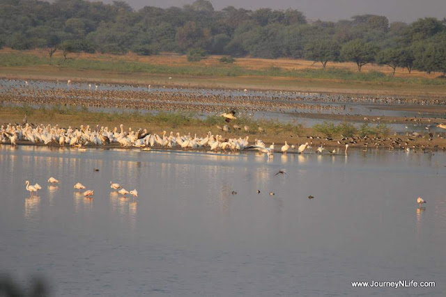 Thol Lake Bird Sanctuary - A birding paradise