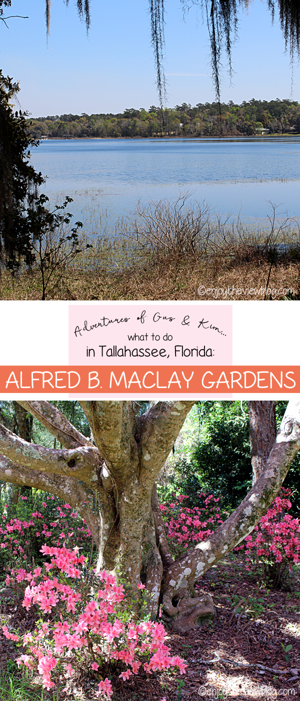 Adventures of Gus and Kim: Alfred B. Maclay Gardens State Park - if you're looking for a must-do activity in Tallahassee, you can't go wrong with Alfred B. Maclay Gardens State Park. It's especially beautiful January - March when everything is blooming!