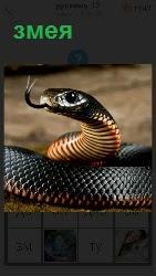 на земле лежит змея с поднятой головой и высунув свой язык