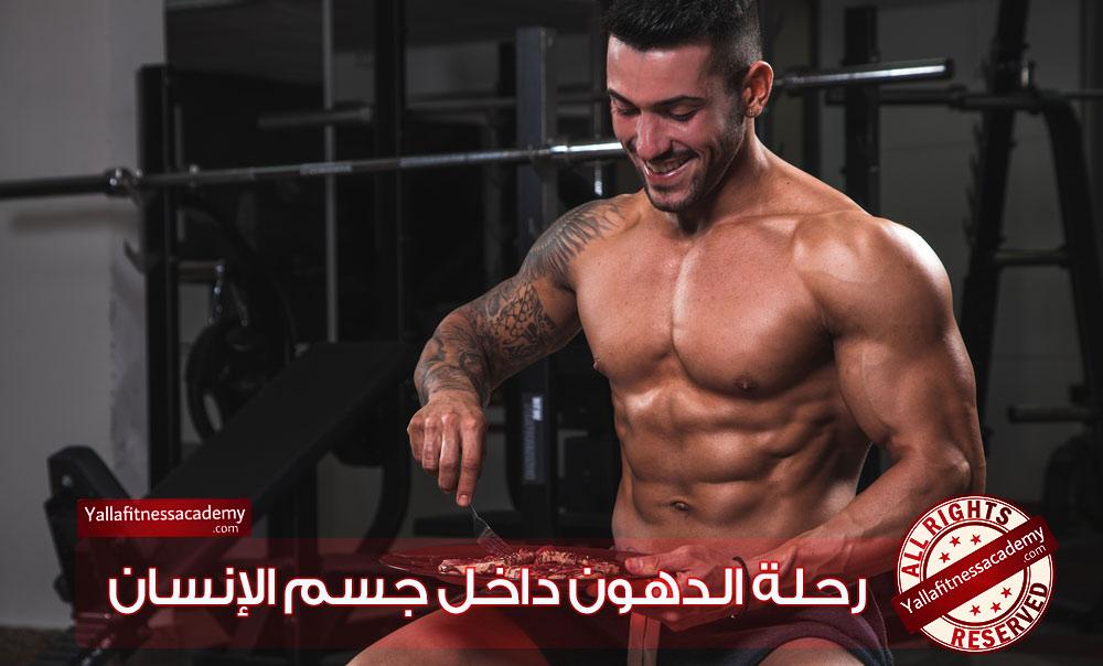 رحلة الدهون داخل جسم الإنسان