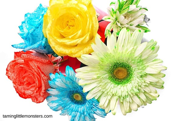 Colourful flowers dyed by the color changing flower experiment.