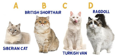 Figure: Can you put these cats in the right order (from Largest to Smallest) according to their actual real-life size?