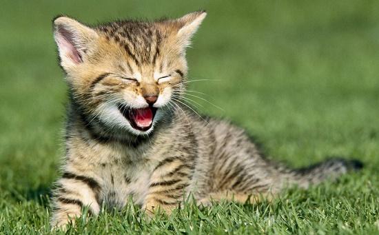 cara menjinakkan kucing peliharaan