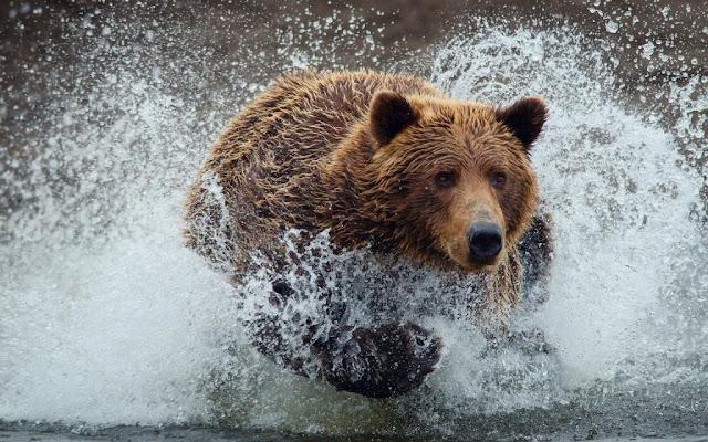 Koleksi Foto Beruang