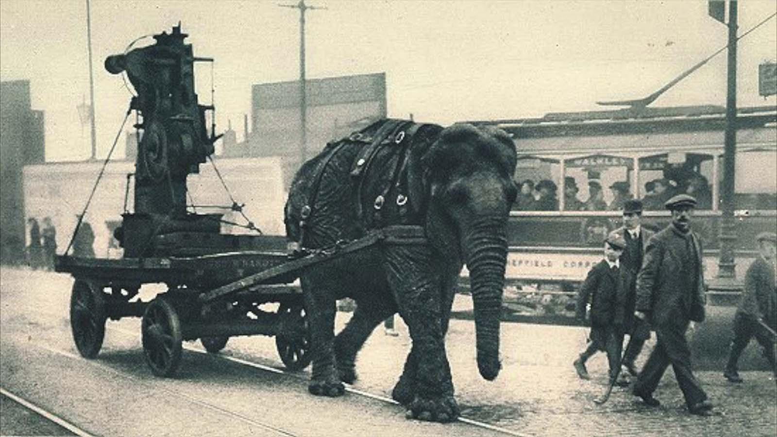 elephants in war