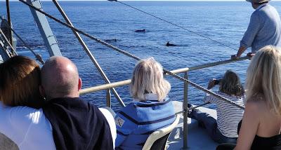 Pescaturismo Mallorca avistamiento de delfines en libertad