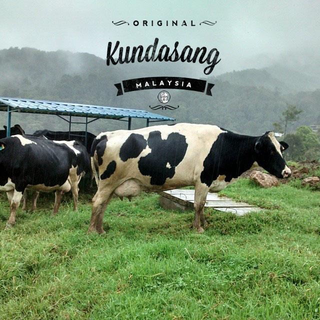 kudasang Desa Cattle Dairy Farm