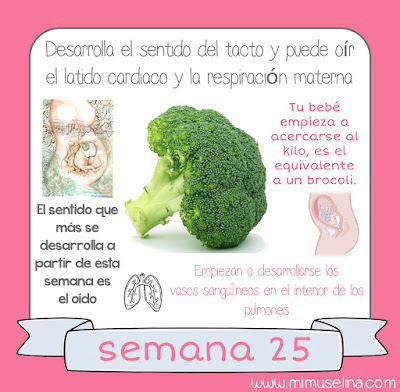 9227f965c TU BEBÉ  Sus medidas  tu bebé mide entorno a los 22 centímetros y empieza a  acercarse al kilo
