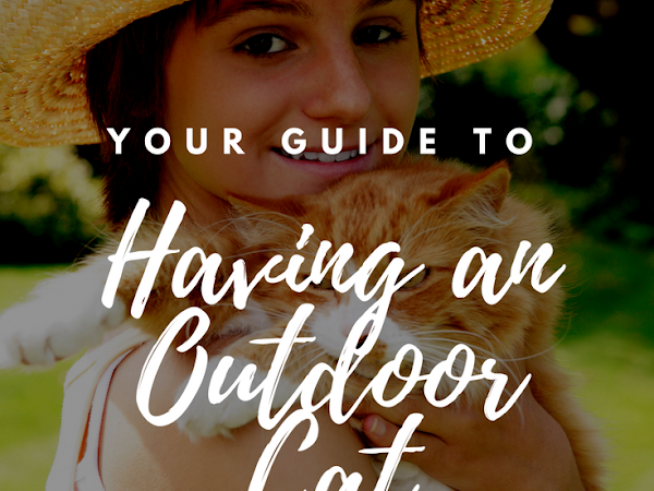 Your Guide to Having an Outdoor Cat