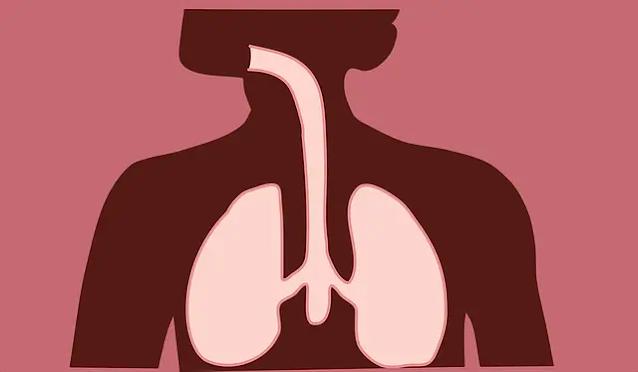 أهم 5 وظائف للجهاز التنفسي وامراض الجهاز التنفسي