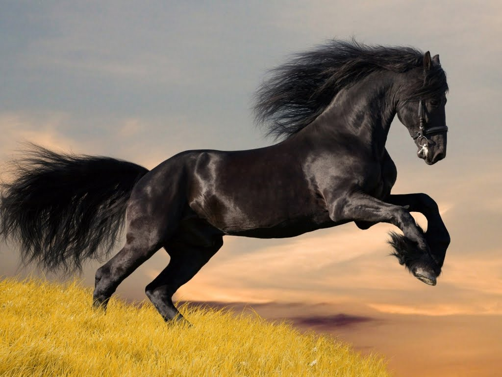 Pictures Blog: Beautiful Black Horses Running
