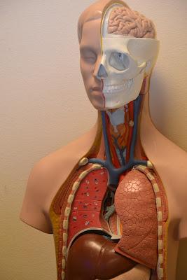 Ginjal: Pengertian, Fungsi, Kalainan Ginjal, Cara Mengobati Penyakit Ginjal