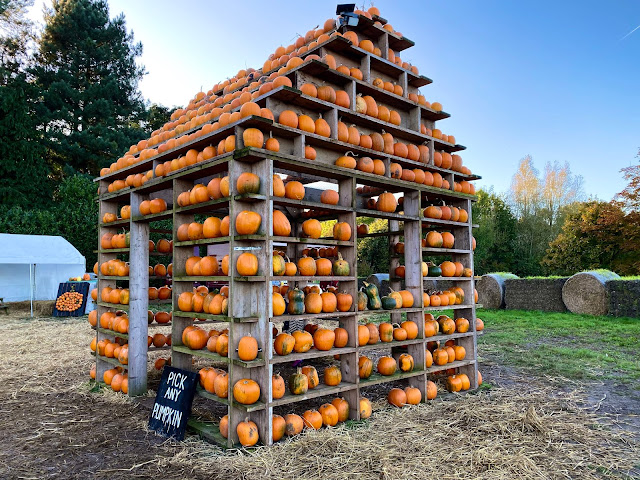 A house shaped structure with shelves for walls and pumpkins on all the shelves at Thursford pumpkin House Fakenham Norfolk
