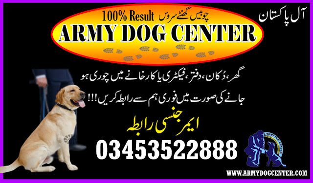 Dog center gujrat 03453522888