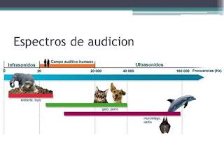 Espectro auditivo de los animales y los humanos