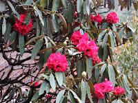 En primavera, Nepal luce más florido