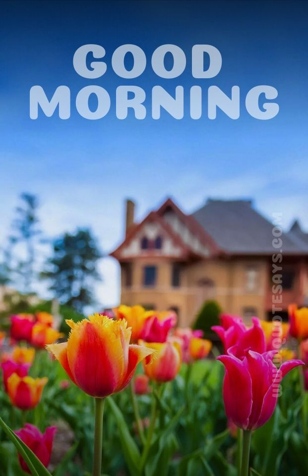 Beautiful Good Morning Tulips