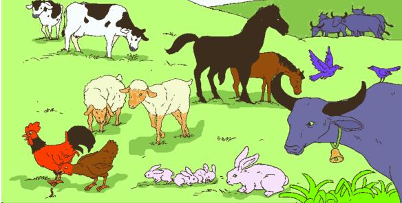 perkembangbiakan hewan secara generativ