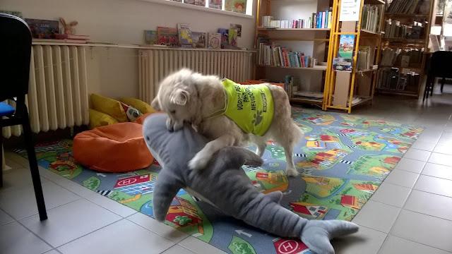 Cilka zápasí s plyšovým žralokem
