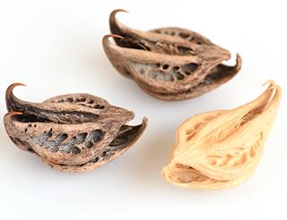 harpagofito raiz