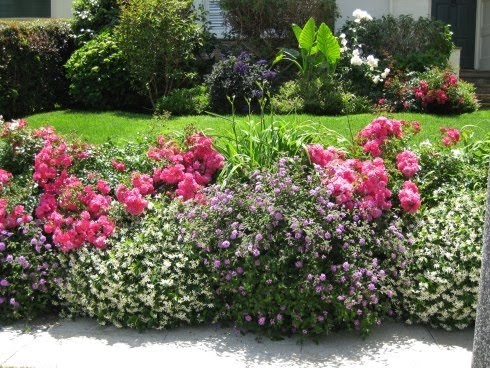 Backyard rose plant ideas, Backyard design ideas, backyard plant ideas, backyard ideas, backyard designs, backyard landscaping