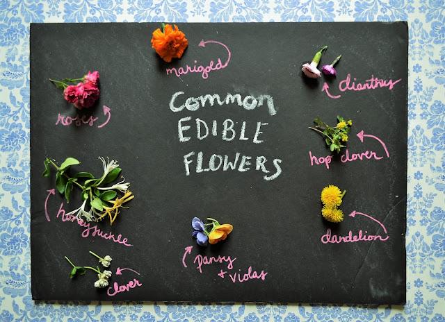 edible_wildflowers_1