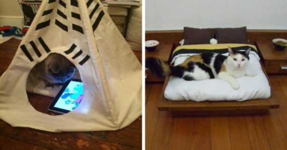 10+ Spoiled Cats That Probably Live Better Than You