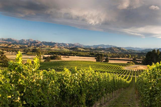Mt. Beautiful winery New Zealand